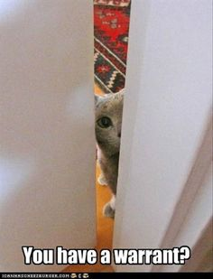 :-)   Funny Animal Pictures With Captions - - - http://pinterest.com/nellibunny/cute-animals/