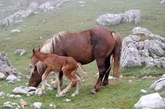 "Bienvenido al mundo I        Picos de Europa 2004 de mi album "" Amor por la naturaleza"", por Olga Carrera Me encantaría que the gustara alguna de estas foots, puedes utilizarlas para lo que the apetezca (para un trabajo del cole, para tu escritorio,….). Gracias. I LOVE Nature. Picos de Europa 2004 Love of nature, Olga Carrera I love you liked this picture you can use it for whatever you like. Thank You. I LOVE Nature"