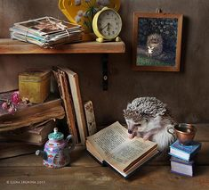 Russian photographer Elena Eremina from St Petersburg made a photo series about cute and funny hedgehogs.