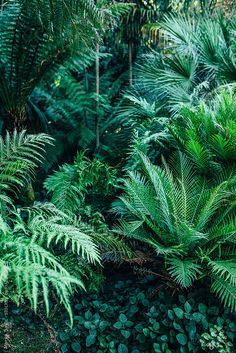 Various types of fern in the rainforest. Tropical Garden Design, Tropical Landscaping, Tropical Plants, Types Of Ferns, Cool Pictures Of Nature, Shady Tree, Garden Entrance, Tropical Forest, Amazon Rainforest