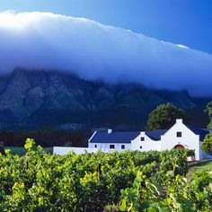 Someone's recommendations regarding the best vineyards in Cape Town's winelands . Cape Town Holidays, South African Wine, Cape Dutch, Wine Safari, Cape Town South Africa, Travel And Leisure, Africa Travel, Vineyard, Beautiful Places