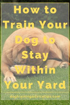 How to Train Your Dog to Stay Within Your Yard. How to Train Your Dog to Stay Within Your Yard. Dog Care Tips, Pet Care, Best Dog Training, Agility Training For Dogs, Brain Training, How To Train Your, Dog Behavior, Dogs And Puppies, Dogs And Kids