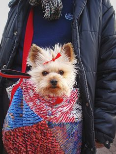 Yorkshire Terrier knitted and/or crocheted carrying shoulder bag. Should be fairly easy to create.