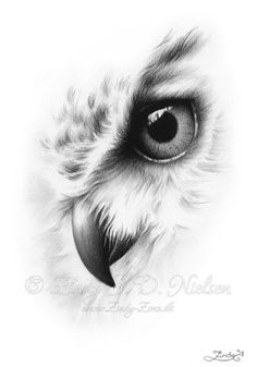Faded Owl Portrait Animal Nature Bird Zindy Nielsen This is a beautiful print w. - Faded Owl Portrait Animal Nature Bird Zindy Nielsen This is a beautiful print with my drawing; Owl Tattoo Drawings, Pencil Art Drawings, Bird Drawings, Tattoo Owl, Tattoo Animal, Mens Owl Tattoo, Sketch Tattoo, Owl Tattoo Design, Tattoo Designs
