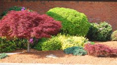 Shrub ideas for the garden in front of the house.