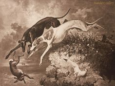 Click to see full size: Engraving of Greyhounds in hare chase by  Alfred William Strutt- Engraving of Greyhounds in hare chase by  Alfred Wi...