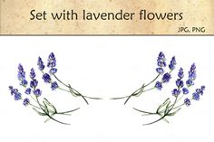 Set with lavender flowers by Little graphic shop on Creative Market