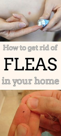 Learn how to get rid of fleas in your home.