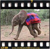 The David Sheldrick Wildlife Trust Video Clips
