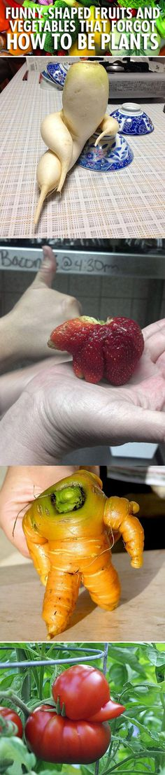Funny-shaped fruits and vegetables that forgot how to be plants…