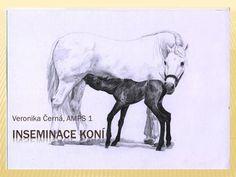 Veronika Černá, AMPS 1.  Inseminace = osemenění klisny čerstvým nebo krátkodobě i dlouhodobě konzervovaným spermatem  3 fáze: - odběr spermatu - zpracování.
