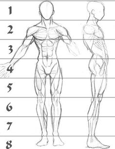 A sketch of human male anatomy from the front and right side with superimposed lines showing figure height relative to head height.  Figure is about 7.5 heads tall.