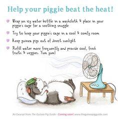 Piggies need TLC in the heat, too!