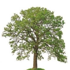 Tree Planting Guide Today you can plant trees when in full leaf with the aid of new wilt-proof sprays that seal the leaves against moisture loss until the roots are established.