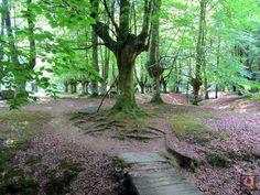 Hayedo de Presazelai en Otxandio (Bizkaia) Trekking, Plants, Paths, Cities, Naturaleza, Fotografia, Norte, Plant, Hiking