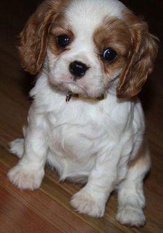 Cute pet contest: Coco