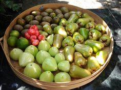 fresh! :9 All Plants, Fresh, Food, Eten, Meals, Diet