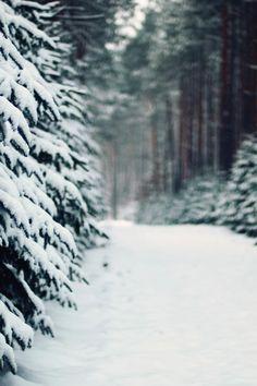 snow, xmas tree