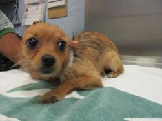 3251 Best Find our homes--lost, found, or adoptable cuties