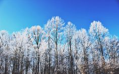 Winter. Ice. Storm. Nature. Photography. Carrie McClellan Photography. Trees. Snow.