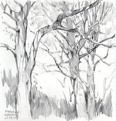 Nature Sketch, Nature Drawing, Plant Drawing, Painting & Drawing, Landscape Pencil Drawings, Landscape Sketch, Landscape Art, Graphite Drawings, Art Drawings