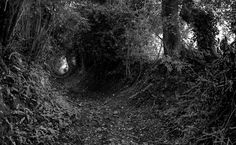 Holloways: Roads Tunneled into the Earth by Time