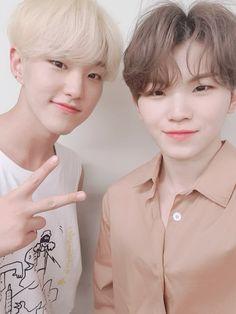 Fancafe Update: Have you heard of the hoshi-woozi combi Wonwoo, Jeonghan, Seungkwan, The8, Seventeen Woozi, Seventeen Debut, Vernon Chwe, Lee Jihoon, Seventeen Wallpapers