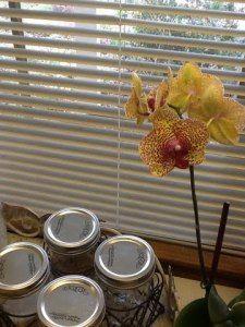 2012 Birthday orchid