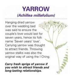Magical herb yarrow