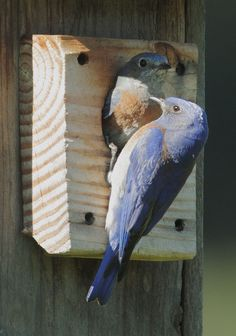 """The """"perfect nestbox"""" is one that will allow native birds in and keep nonnative birds, such as European starlings and house sparrows, out. It has much to do with the size of the hole, although placement makes a difference, too."""