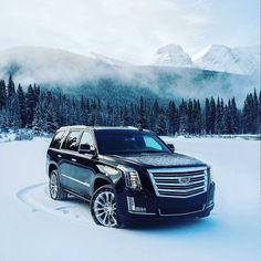 Cadillac Escalade, Escalade Esv, Porsche 991, Audi, Bmw, My Dream Car, Dream Cars, Lamborghini, Muscle Cars