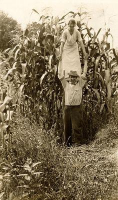 Minnesota, 1916
