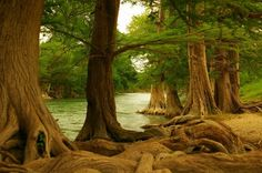 Guadalupe River State Park, Texas