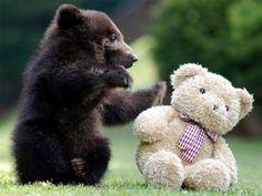 Prueba Documental B: Un oso con un oso. | ¿Puedes leer este artículo sin gritar de emoción?
