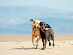 Searching for a great getaway spot, but worried about leaving Spot behind? Why not bring your dog with you on vacation and stay at a resort, bed-and-breakfast or hotel designed to pamper both you and your pooch? Here are 10 paws-itively prime U.S. hotel recommendations for dogs and their owners