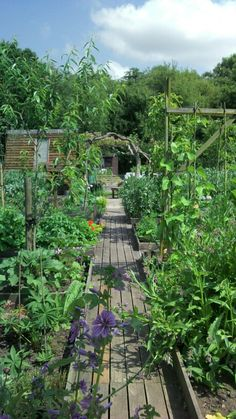 PHOTO ONLY: Feed the Family: vegetable garden with raised wooden walkways to keep from compacting the soil  make getting in\out easy!