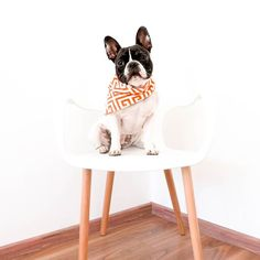 Happy Mother's Day from Tom and Tom's mom  __  Reversible bandana by @stellalunacompany  __  #LOVEABULLY #frenchies1 #hankandhound  #photooftheday #sunnypicchallenge  #bestwoof #houndsbazaar_ff #thefrenchiepost #dailybarker #animalbuzz #dogsofinstagram #lacyandpaws #rainbow_wall  #excellent_dogs #meowvswoof #french_bulldogs #mydogiscutest #cute #INSTAFRENCHIE #frenchielove_feature #topdogphoto #frenchbulldog #frenchiesofcdmx  #stellalunamodel2016 by tomasa_thefrenchie