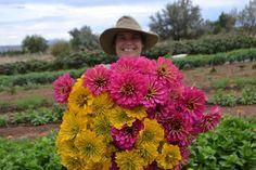 zinnias Zinnias, Farm Life, Plants, Flora, Plant