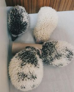 Hedgehogs may look prickly at first...