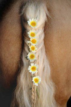 Love this, I use to put flowers in my horses tail when we road in parades