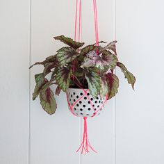 Hanging Planter - Design*Sponge for Mrs. Meyer's Clean Day | Elevate your houseplants with this easy DIY project and show off both your artistic side and your green thumb.