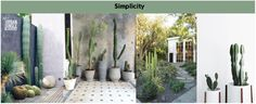 Simplicity with Cacti