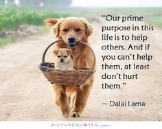 Our prime purpose in this life is to help others. And if you can't help them, at least don't hurt them. Life quotes on PictureQuotes.com.
