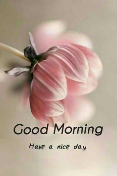 Good Morning Couple, Good Morning Wishes Friends, Good Morning Happy Saturday, Good Morning Roses, Good Morning Picture, Good Night Love Images, Good Morning Beautiful Images, Cute Good Night, Good Morning Images Hd