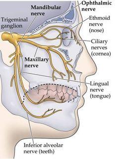 Trigeminal nerves