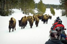 Best vacation, snowmobiling tours in Jackson Hole, WY with family.