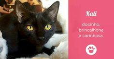 Adote um gatinho, será uma grande fofura em sua vida! :)