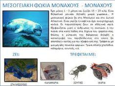 Σχετική εικόνα Undersea World, Deep Sea Creatures, Preschool Classroom, Ocean, Animals, Education, Animales, Animaux, Sea