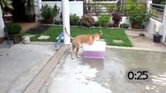 Now here's something you don't see everyday...dogs who LOVE taking a bath!