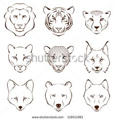 set of simple line illustrations showing different facial features of wild animals - lion, tiger, cheetah, cougar, leopard, lynx, fox, bear and wolf